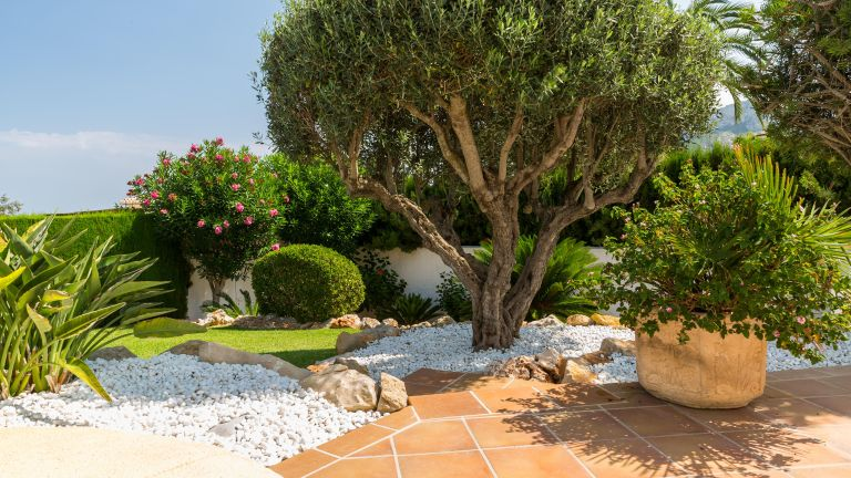 mediterranean garden ideas: olive tree and patio