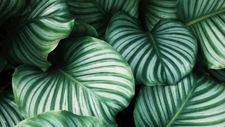 how to get rid of mealybugs on houseplants - close up of plant leaves - unsplash