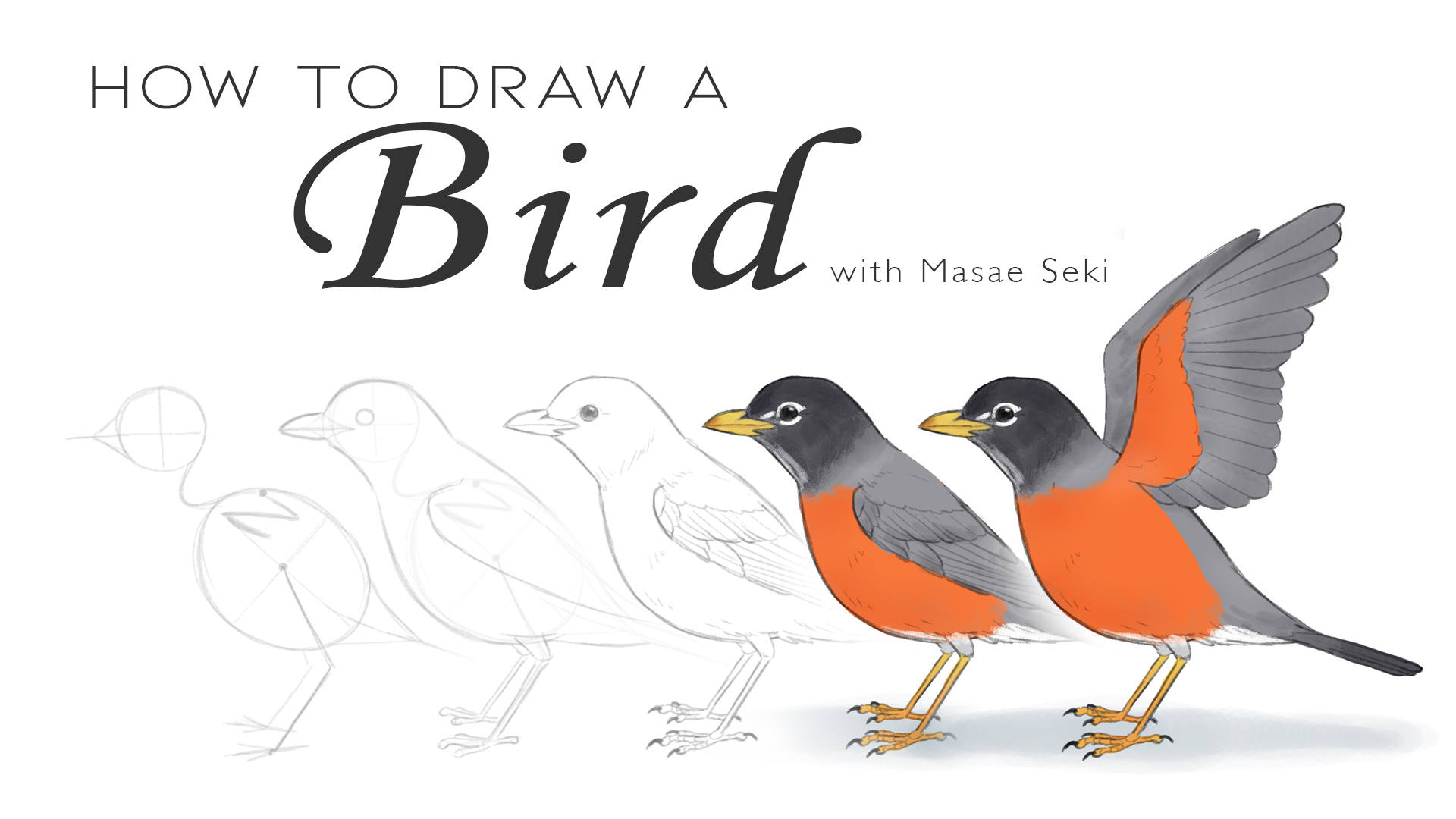 How To Draw A Bird Creative Bloq