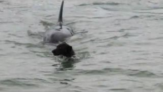 A screengrab from Deonette De Jongh's video of a dog's encounter with an orca.