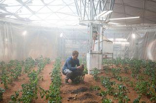 Mark Watney Grows Potatoes in 'The Martian'