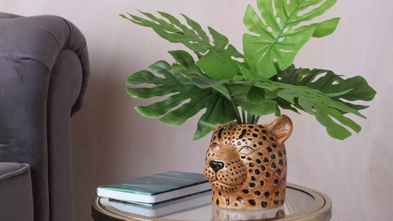 Houseplant from Argos