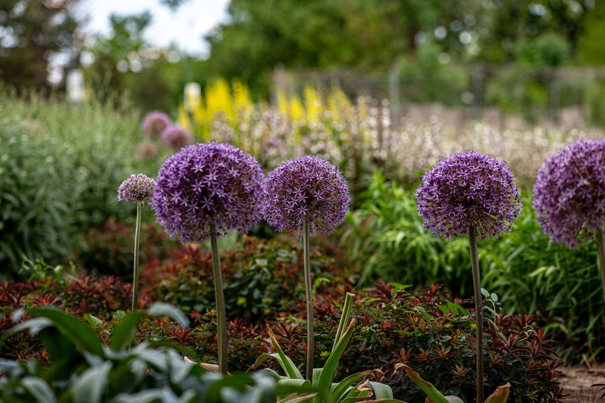 Gardener Scott's top 5 tips for companion planting – they will change the way you think about growing plants together