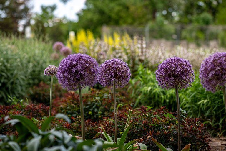 Gardener Scott's companion planting tips