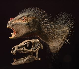 Heterodontosaurus model and skull