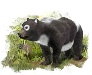 oldest ancestor of giant panda lineage illustrated