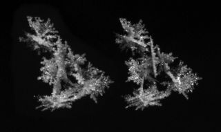 Stereo snowflake photo