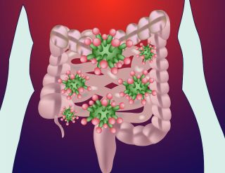 An artist's diagram shows bacteria residing in the human gut.