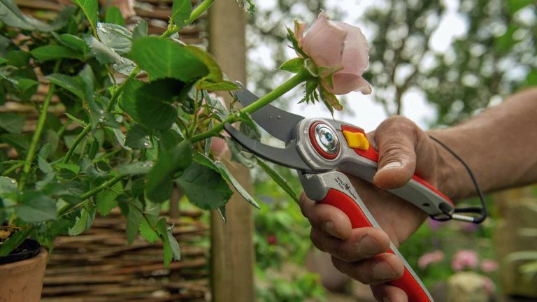 Best secateurs: WOLF-GARTEN RR5000 PROFESSIONAL SECATEURS