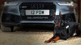 Protection Dogs Worldwide trains some of the most protective dogs in the world