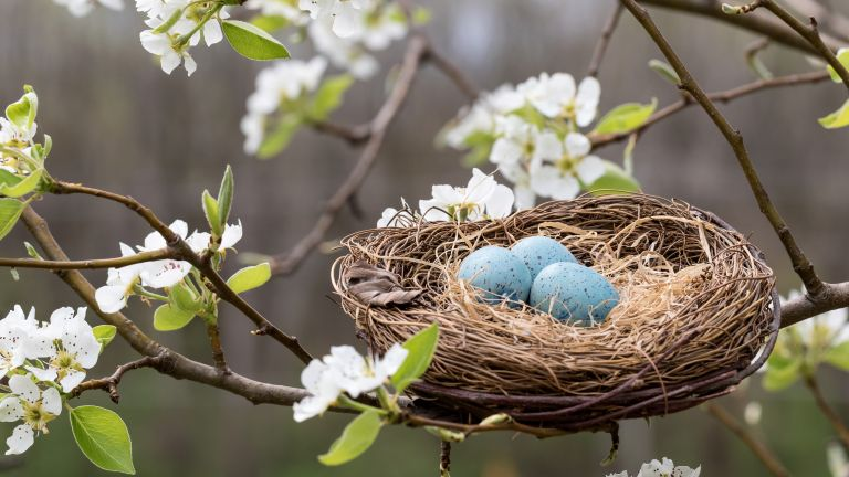 Is it illegal to remove a bird's nest