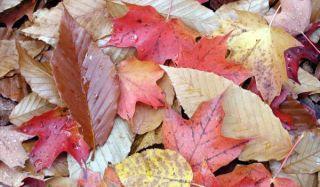 fall-foliage-101007-02