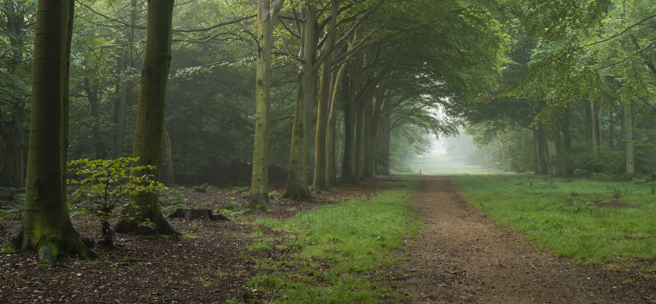 Woodland sounds increase relaxation reduce anxiety stress