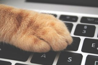 Cats on Twitter