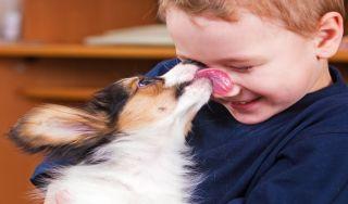 Dog licks boy