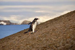 penguins antarctic volcano