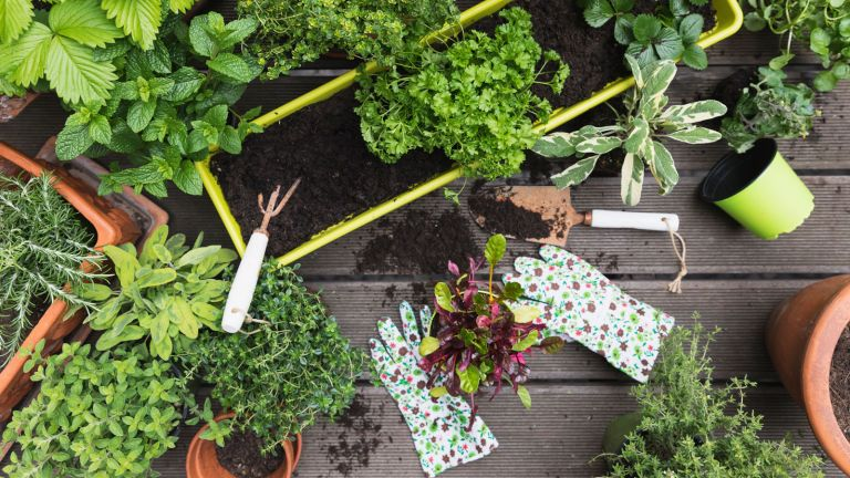 garden gloves and potted herbs