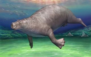 Paleoparadoxia illustration
