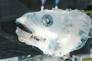 "Researchers use ""Bassbot"" to study suction feeding"