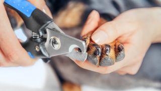 a dog having its nails clipped