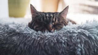 On-trend marshmallow bed or traditional style? Best cat beds you can buy your feline