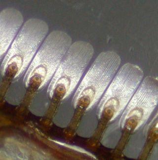 Diving beetle setae