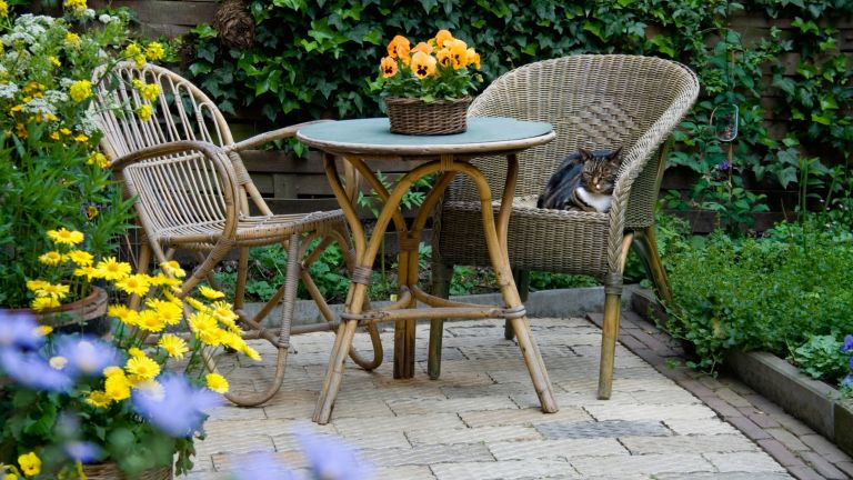 Garden Patio with Wicker Furniture and Housecat