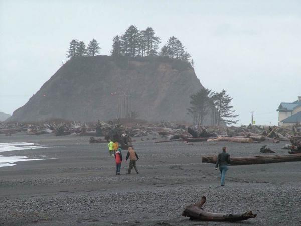 La Push shoreline strewn with drift wood.