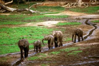 Dzanga-Sangha Special Reserve, Central African Republic