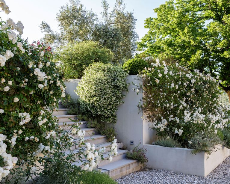 Sloped backyard ideas covered in gravel with steps and lush green and white planting.