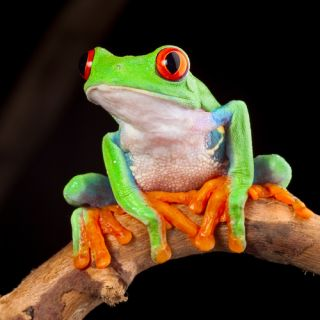 toad-or-frog