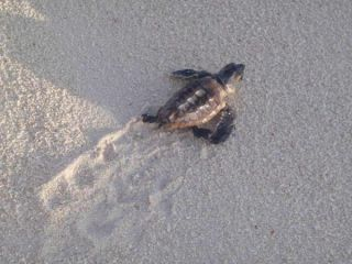 little-turtle-sand-100622