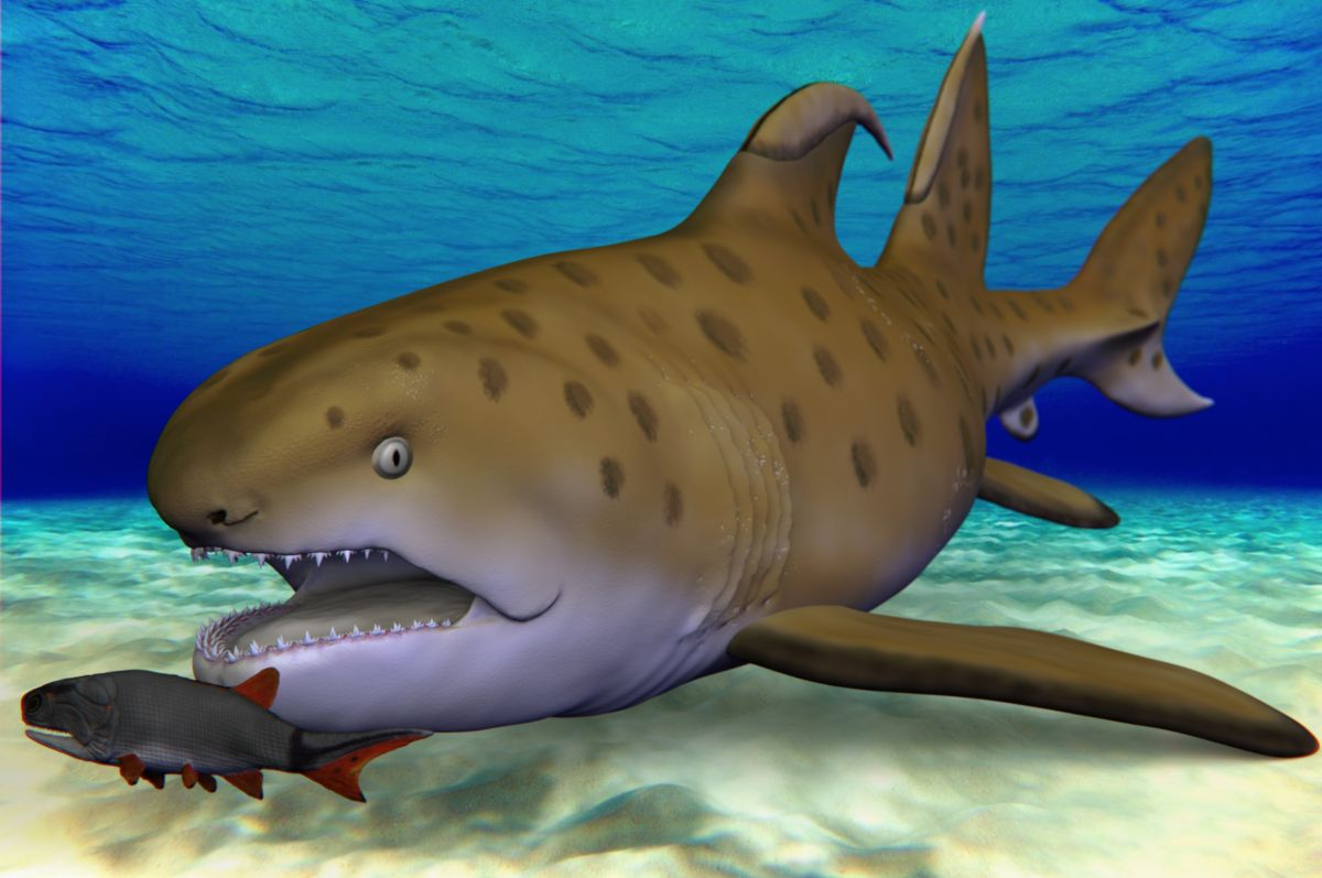 """The 300 million-year-old """"Godzilla shark"""", identified as a new species, has been given a new name"""