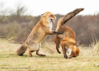 Have a giggle at the Comedy Wildlife Photography Awards finalists