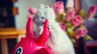 Best kitten teething toys: Kitten biting into toy