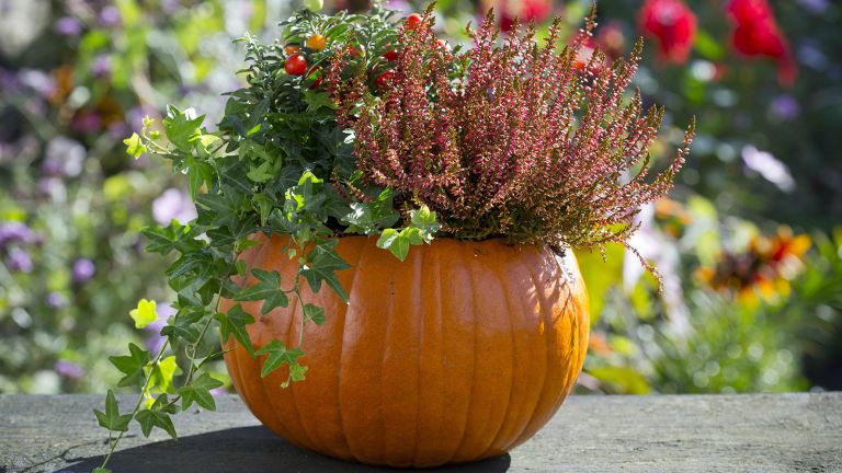 Pumpkin planter with seasonal plants
