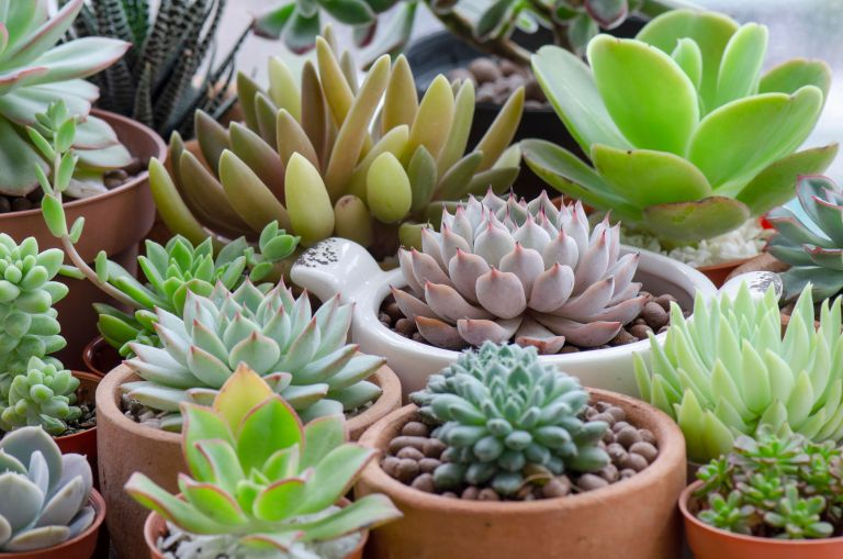 Sustainable living: House plants