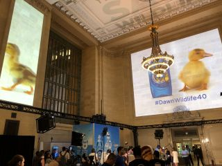 Projection Mapping Transforms Grand Central Into Wildlife Refuge