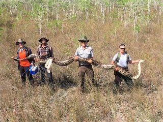 python in Florida