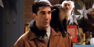 Following David Schwimmer's Blunt Monkey Comments During Friends: The Reunion, The Trainer Is Now Speaking Out