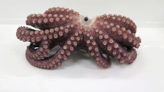 The octopus's ninth arm is an offshoot on its left third arm.