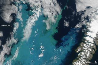 NASA's Aqua satellite captured this image of a brilliantly colored phytoplankton bloom off the coast of Novaya Zemlya, a Russian island, on Aug. 24.