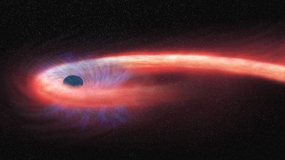 'Spaghettified' star wrapped around a black hole spotted for the first time
