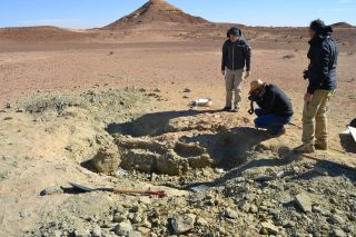 The excavation site of the first specimen of the new crocodilelike species, <em>Machimosaurus rex</em> on the edge of the Sahara Desert.