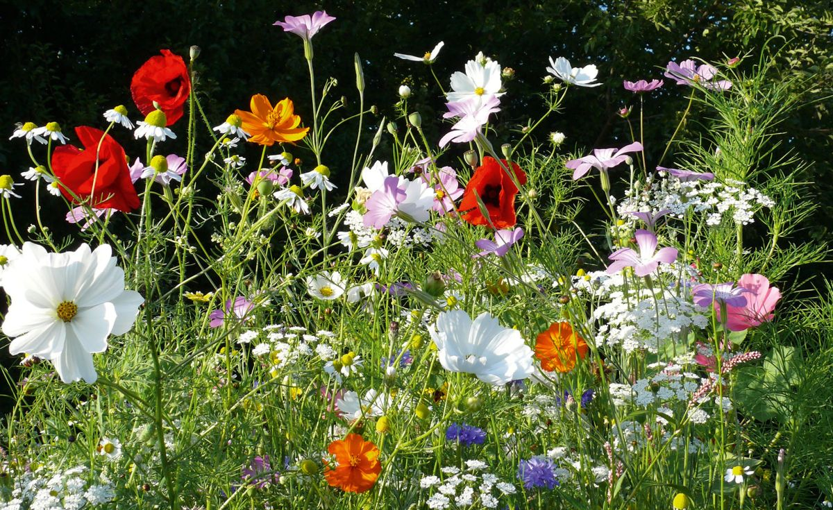 wildflower seeds  mixes and beebombs for a bee friendly