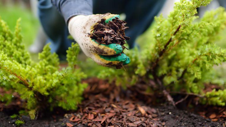 adding mulch to a garden