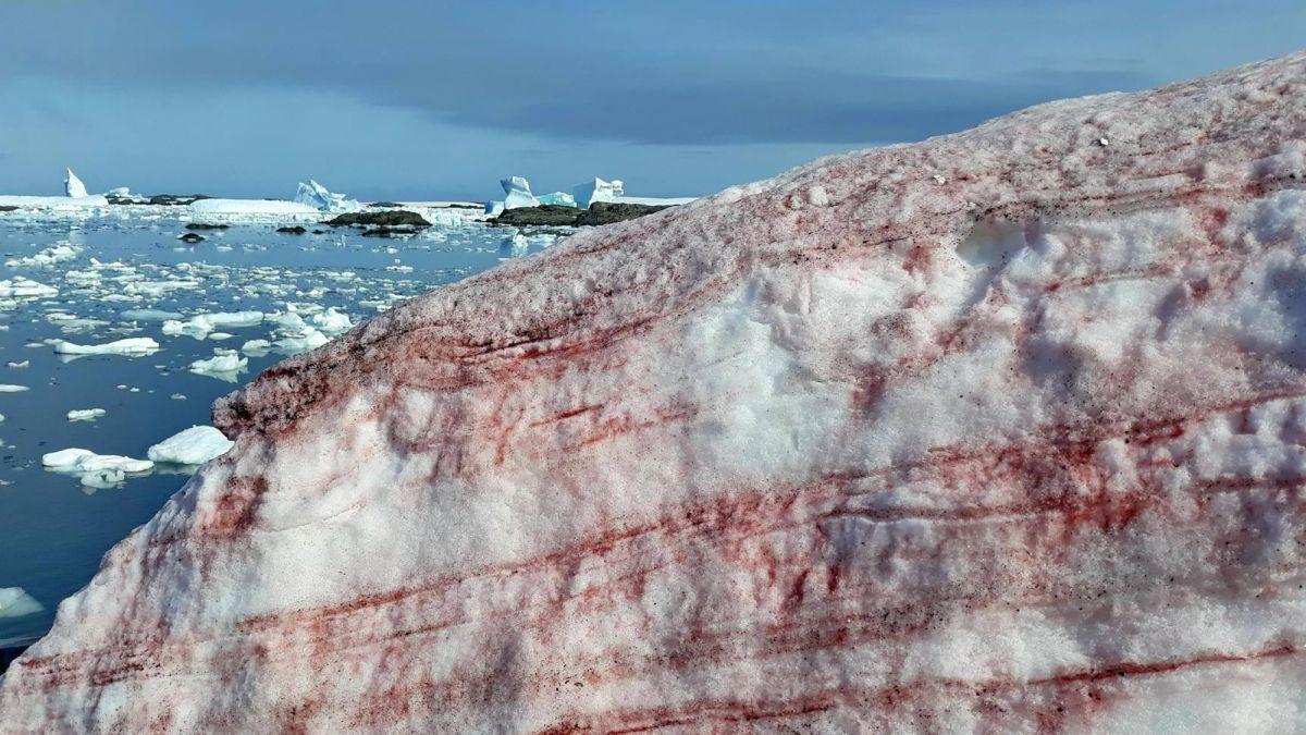 Spooky 'blood snow' invades Antarctic island