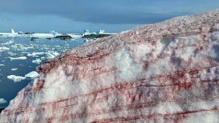 "Streaks of red algae coat the Antarctic ice in ""blood snow."""