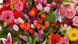 Flower meanings: From Roses to Peonies, this is what different flowers mean