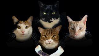 Cats posing as Queen